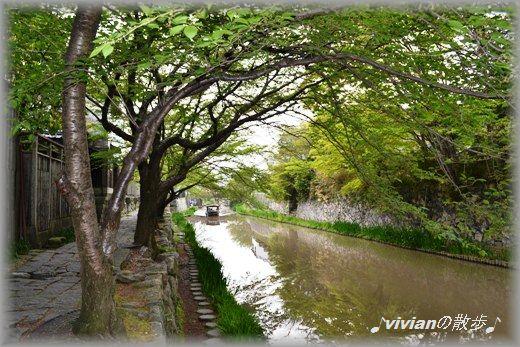 川沿い2.jpg